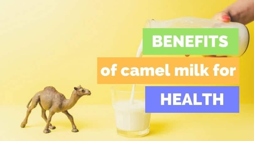 What is the benefits of camel mil Health benefits of camel milk for toddlers Benefits of camel milk over cow milk Uses and benefits of camel milk Advantages of camel milk