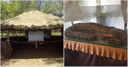 Government puts Omieri the famous python on display