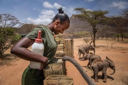Meet the fearless Samburu woman saving endangered elephants