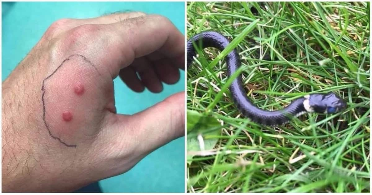 Q&A: Feeding a Ribbon Snake in the Backyard - Gartersnake.info |Garden Snake Bite