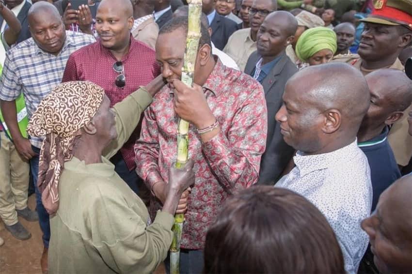Uhuru receives sugar cane as a gift from an elderly woman in Kiambu county. PSCU