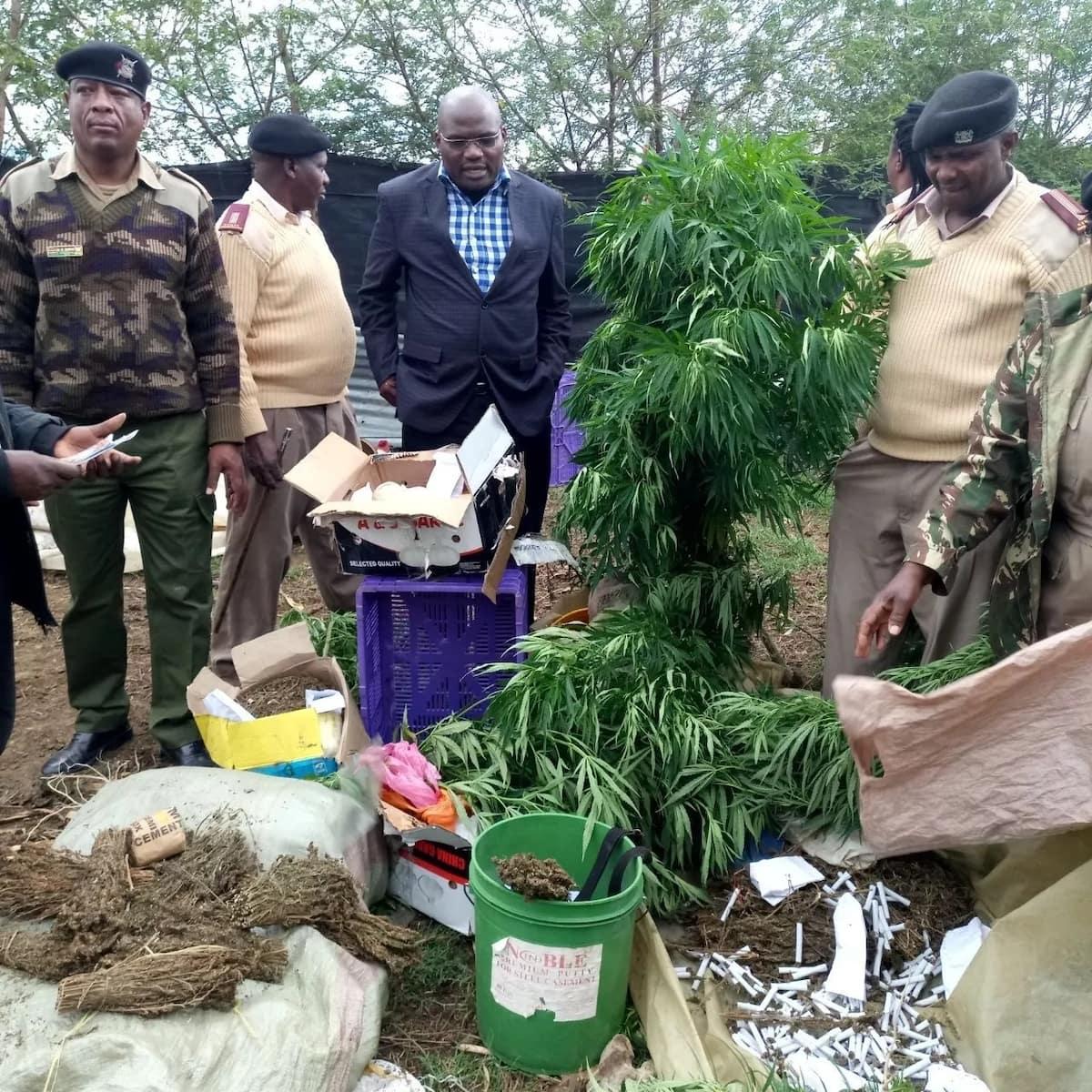 Church leader in Nakuru arrested for farming bhang