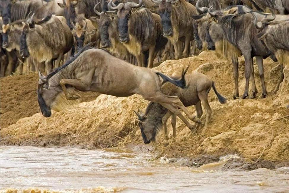 Kenyan tour operators accuse Tanzanian officials of lighting fires near border to prevent wildebeest migrating to Kenya