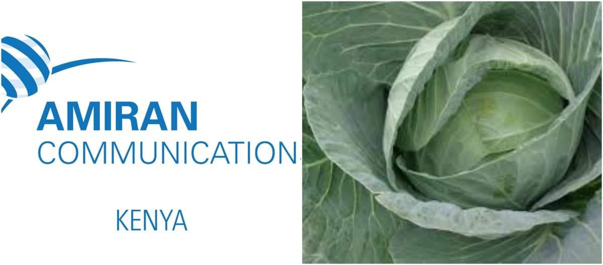 amiran kenya greenhouse contacts amiran communications ltd kenya contacts amiran kenya telephone contacts