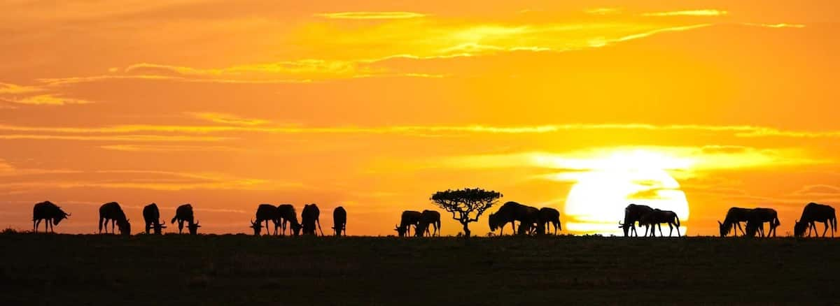 Best Tours And Travel Companies In Kenya 2017-2018