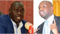 Murkomen is egocentric politician clinging on DP Ruto's coat - Jubilee MP Kutuny