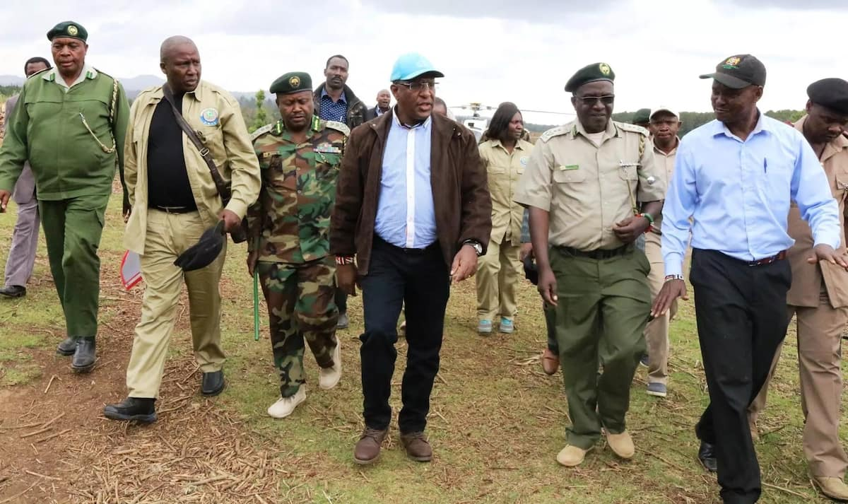 Government extends tree harvesting ban with 6 months to allow appointment of new KFS board