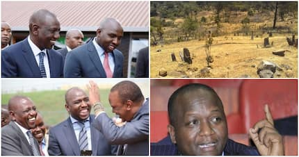 Mau Forest politics build Ruto and can kill his career - Gideon Moi's ally