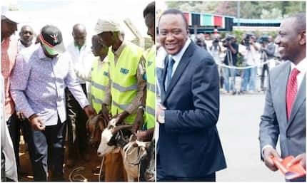 Wafugaji wa kaunti ya Nakuru watabasamu huku Uhuru, Ruto wakiwanunua mbuzi wote sokoni