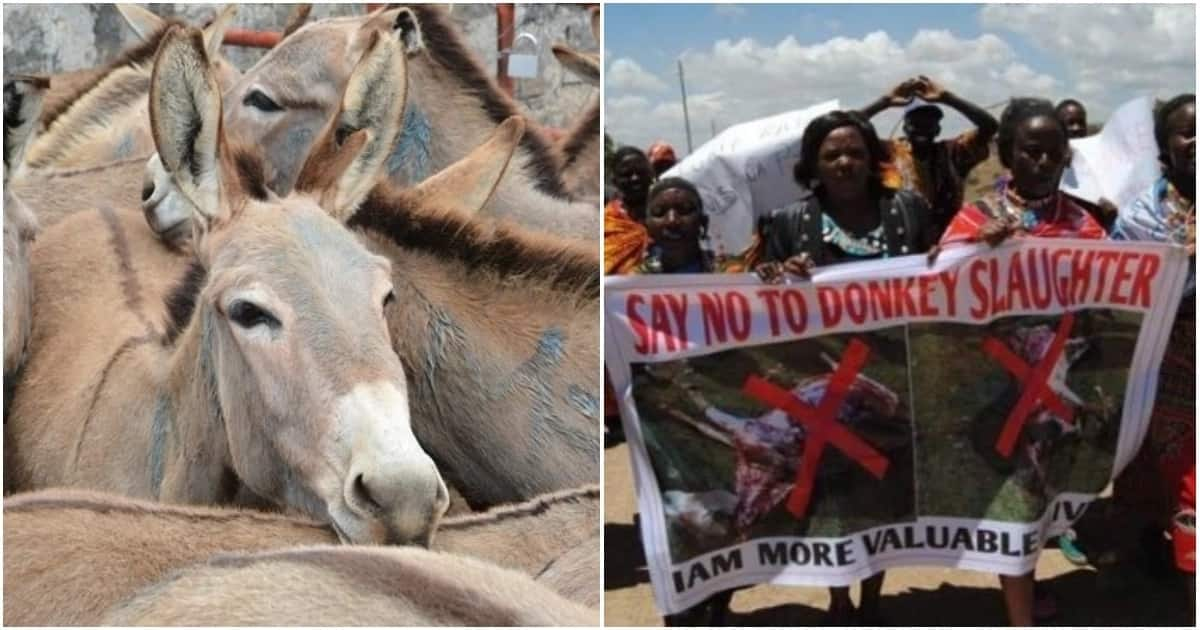 Rampant donkey theft alarms residents of Bomet as demand for the animal's meat skyrocket
