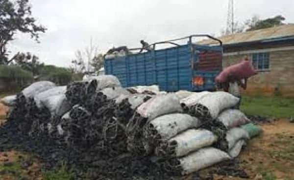Kilifi KWS, GSU officers nabbed while escorting lorries ferrying charcoal