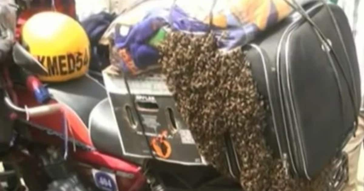 Swarm of bees attack motorcyclist in Baringo leaving locals in shock