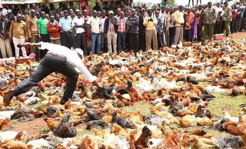 William Ruto goes back to his roots where he started as chicken seller, launches chicken auction