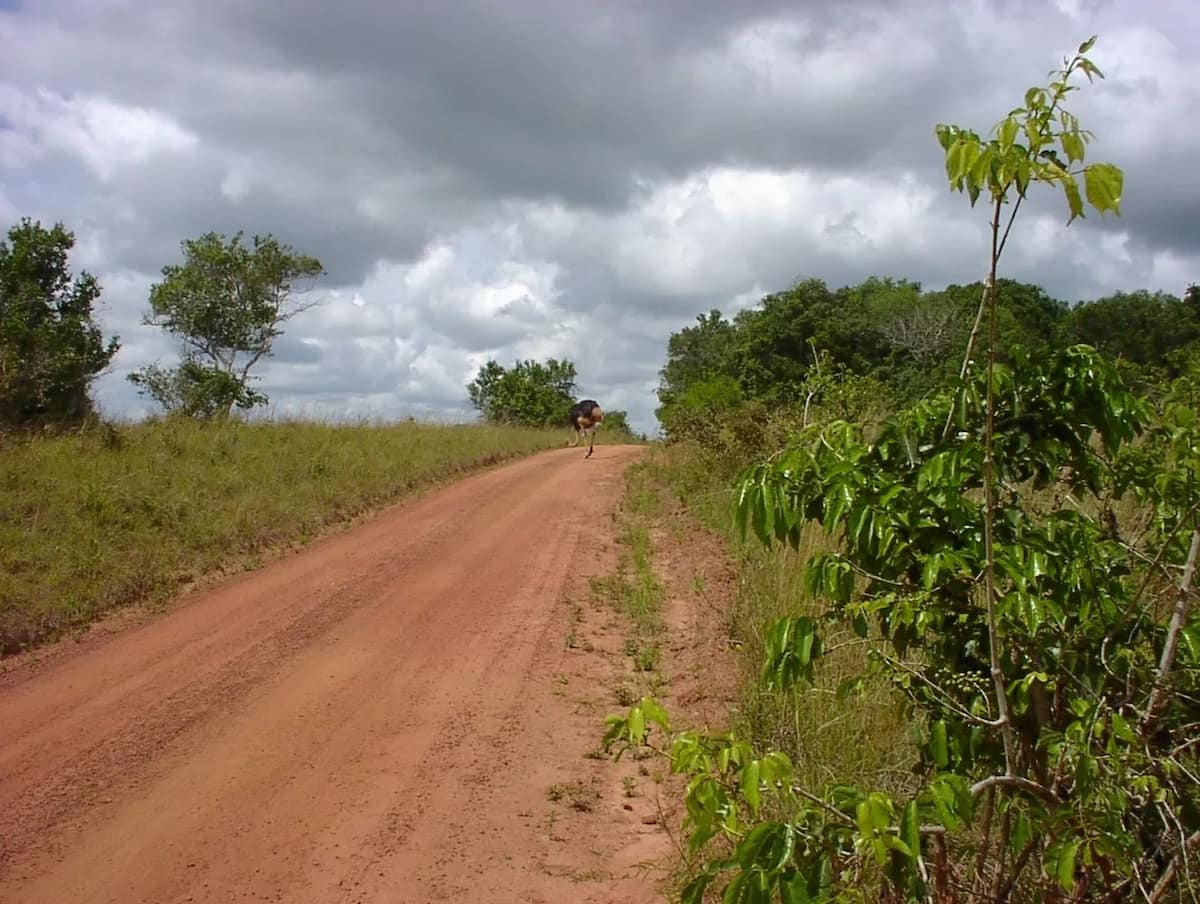 Road in Murang'a where married men and their mpango wa kando engage in live lungula with reckless abandon