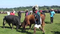 Luhya Marriage: Dowry Negotiations, Code of Conduct and Bizarre Beliefs