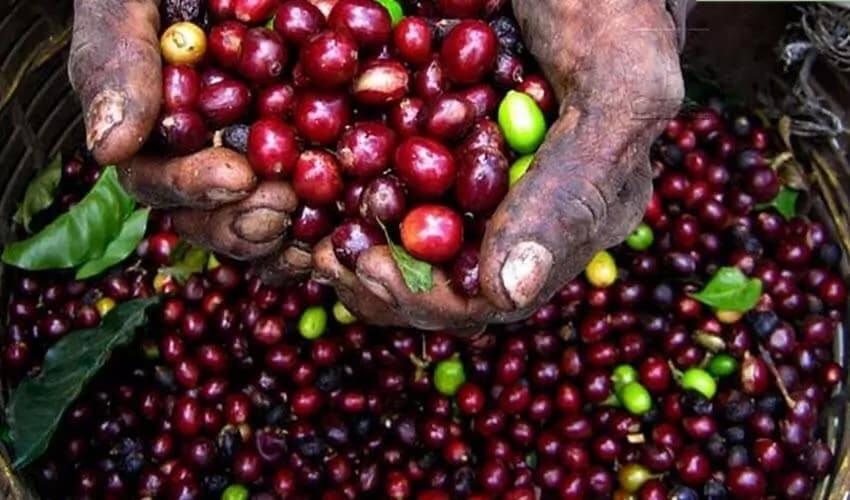 Kenyan fresh produce export to UK falls due to high poison residue