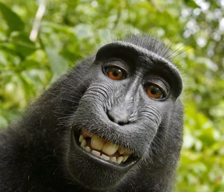 Man who was sued by monkey claims the bizarre legal battle over photo copyright has left him broke