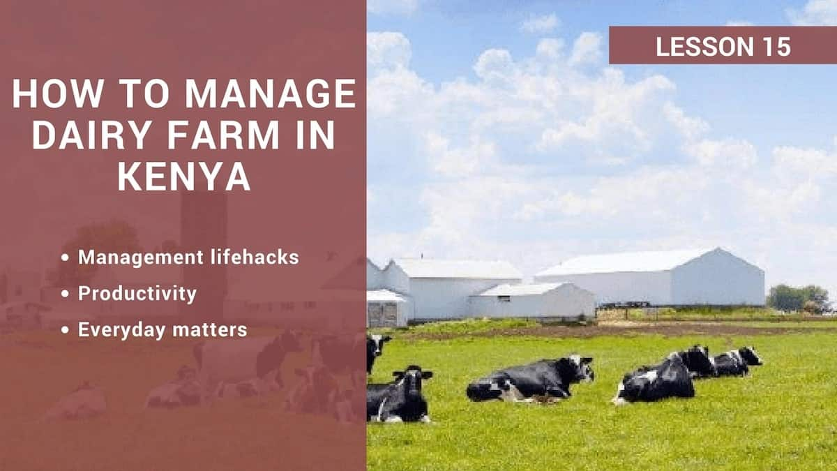 How to manage dairy farm in Kenya