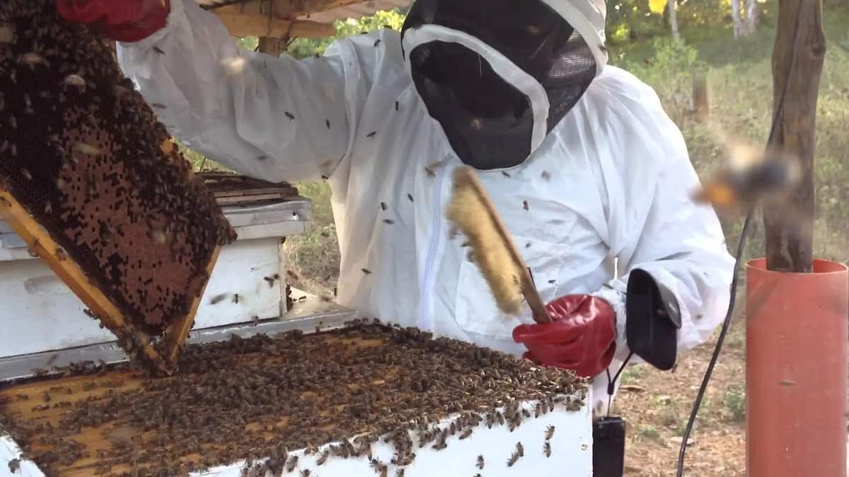 How to start bee keeping
