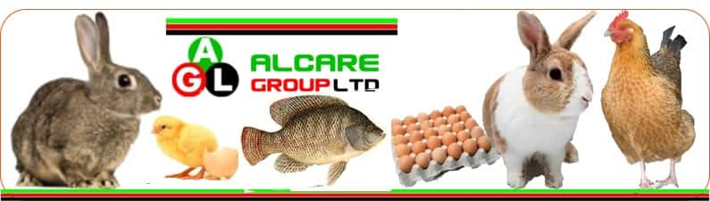commercial rabbit farming in kenya