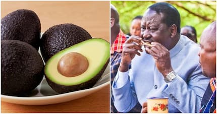 Raila mulls over avocado factory in Kisumu as he urges locals to embrace the fruit