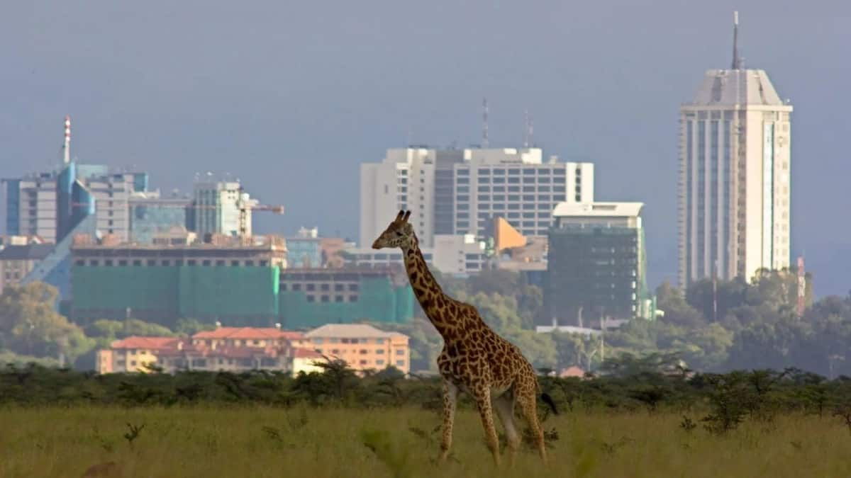Things to do in Nairobi for fun