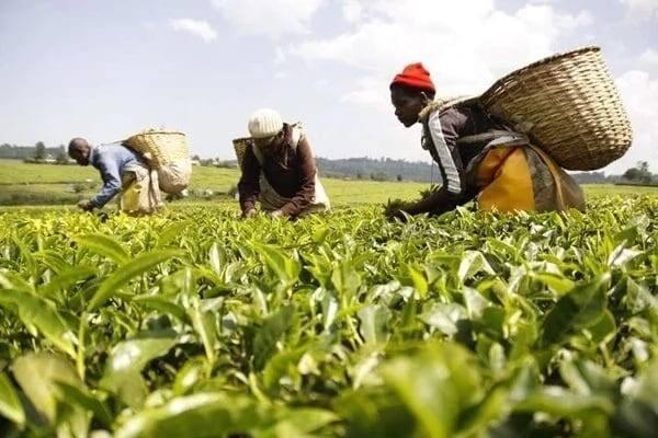 Current minimum wage in Kenya What is the minimum wage in Kenya Minimum wage guidelines in Kenya minimum wage per job