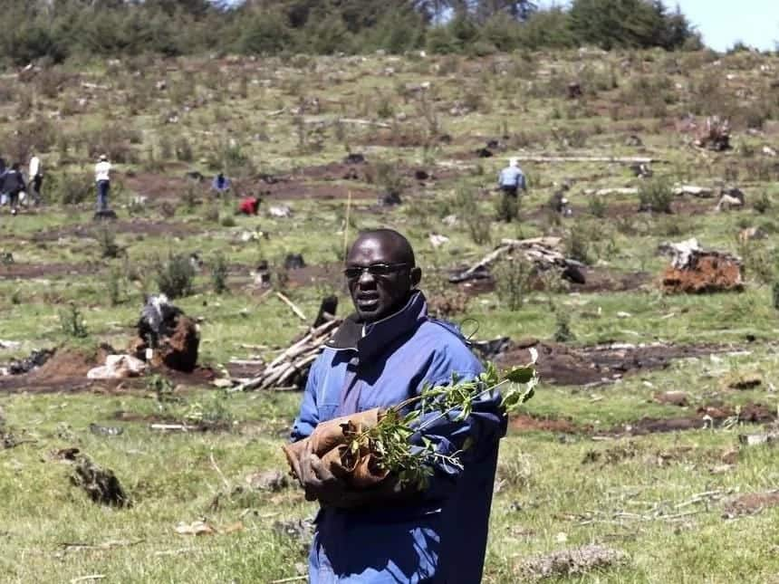 The Mau Forest destruction in pictures