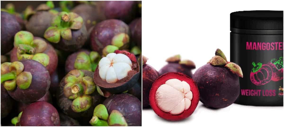 purple mangosteen  purple mangosteen in Kenya purple mangosteen for weight loss