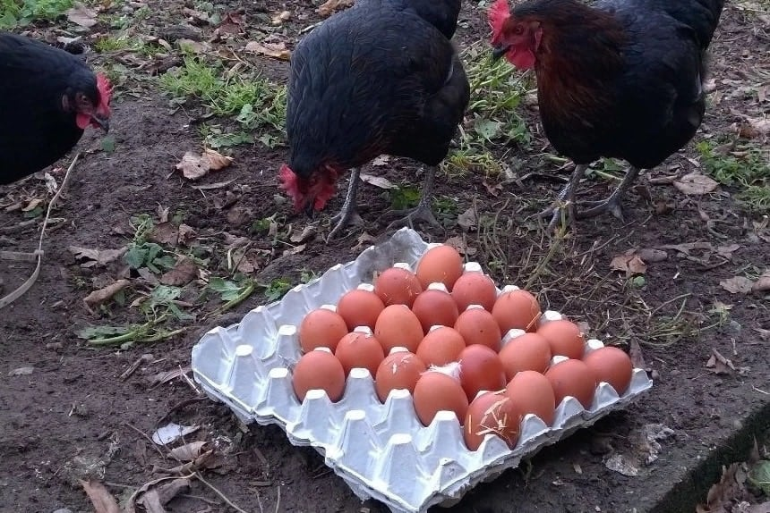 Kiambu poultry farmers protest influx of imported eggs from Uganda