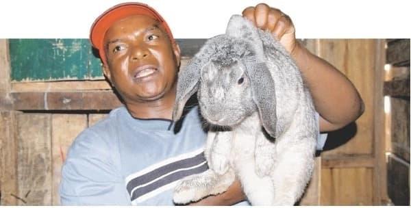 Starting rabbit farming in kenya,Success stories on rabbit farming in Kenya,commercial rabbit farming in kenya