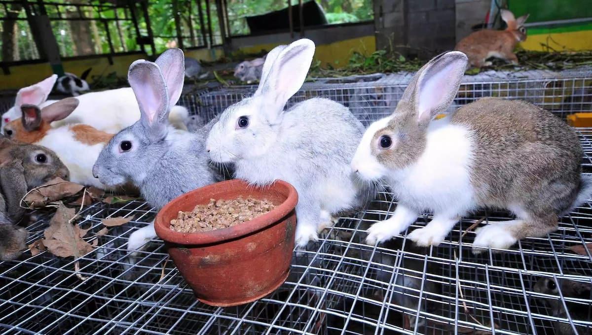 Rabbit farming in Kenya - rabbit buyers in Kenya
