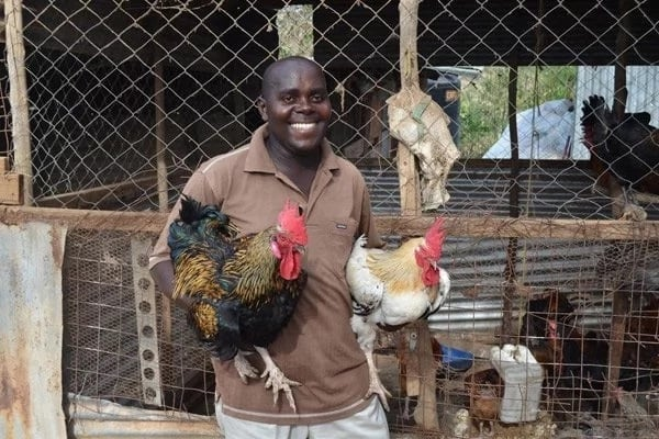 Success stories of poultry farming in Kenya ▷ Tuko co ke