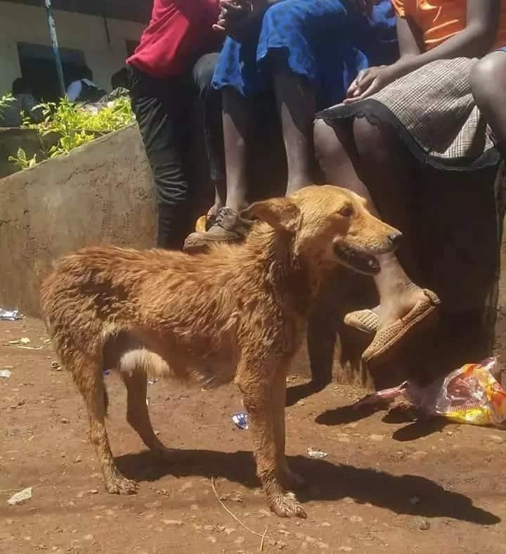 Maajabu ya mbwa akikatalia palipokuwa boma lao baada ya mwenye na makazi kufariki katika mkasa wa Solai