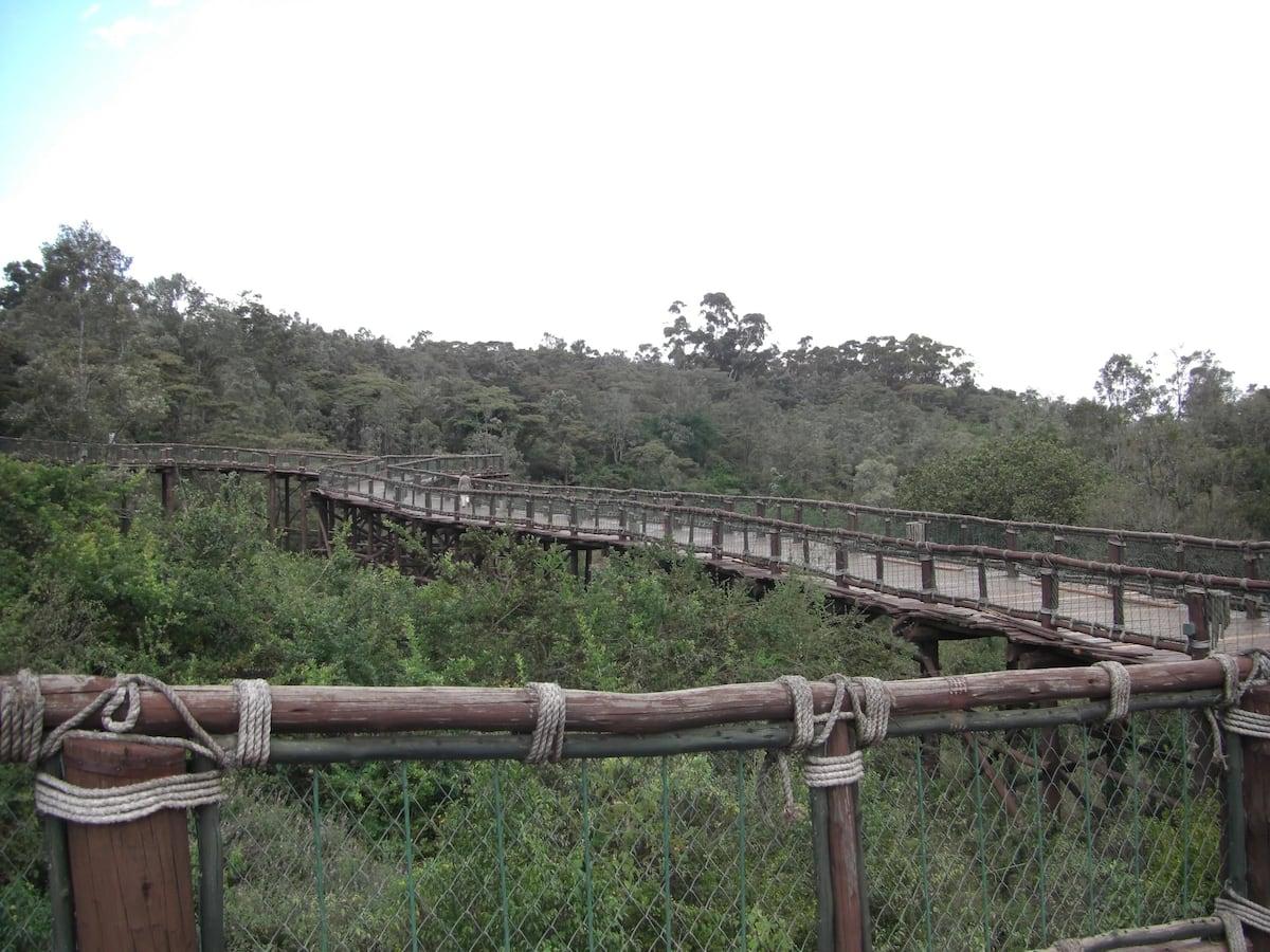 KWS Safari Walk, Nairobi (Source: KWS)