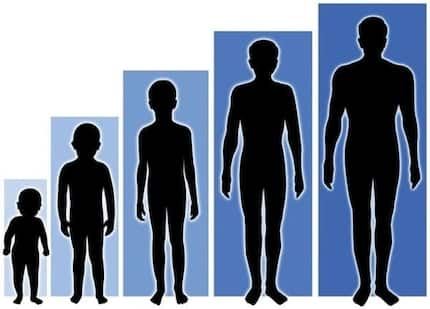 The taller you are, the more likely you are to get cancer, research reveals