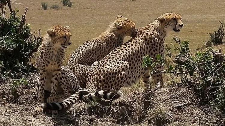 Serengati beats Maasai Mara in 2018 ranking of Africa's best safari parks