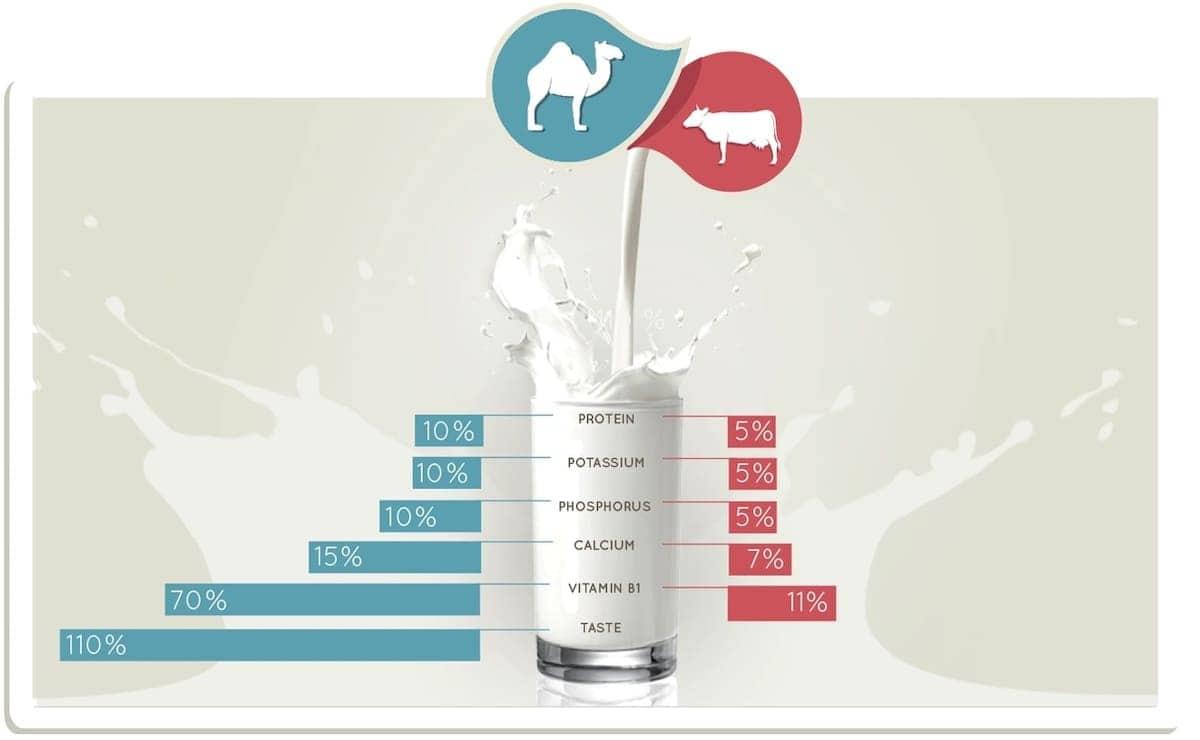 Benefits of camel milk for health Health benefits of camel milk for toddlers Benefits of camel milk over cow milk Uses and benefits of camel milk Advantages of camel milk