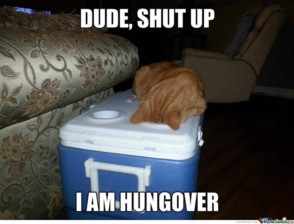 Funny memes of cats on hangover