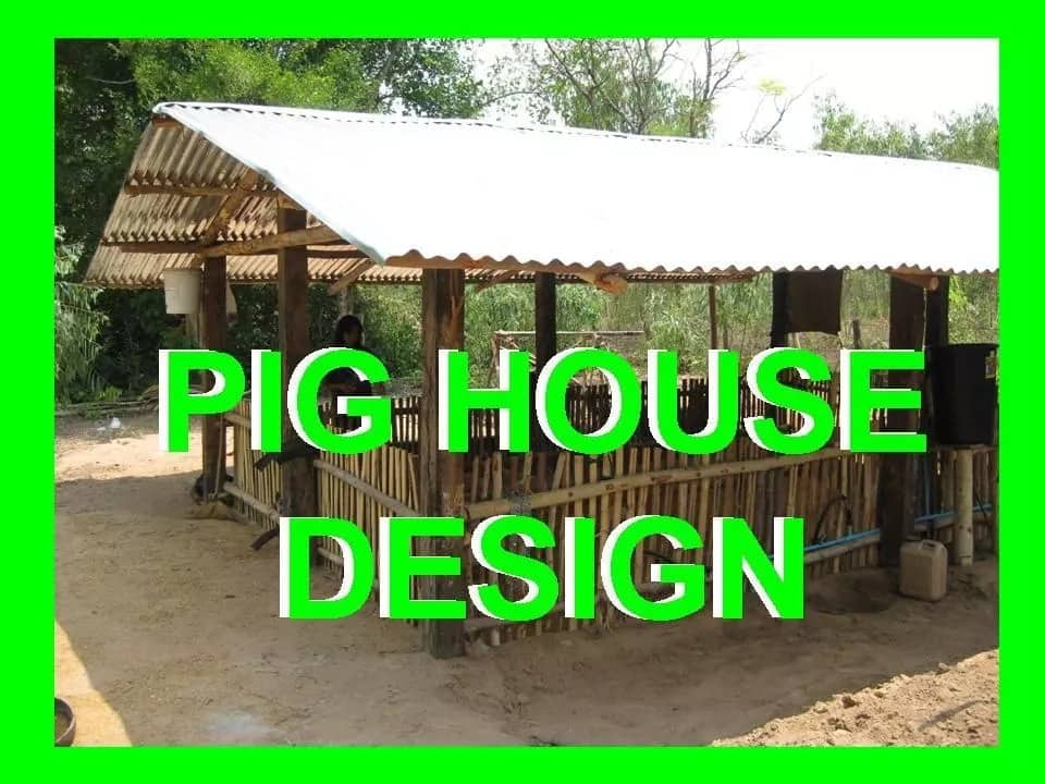 Small scale pig farming in Kenya