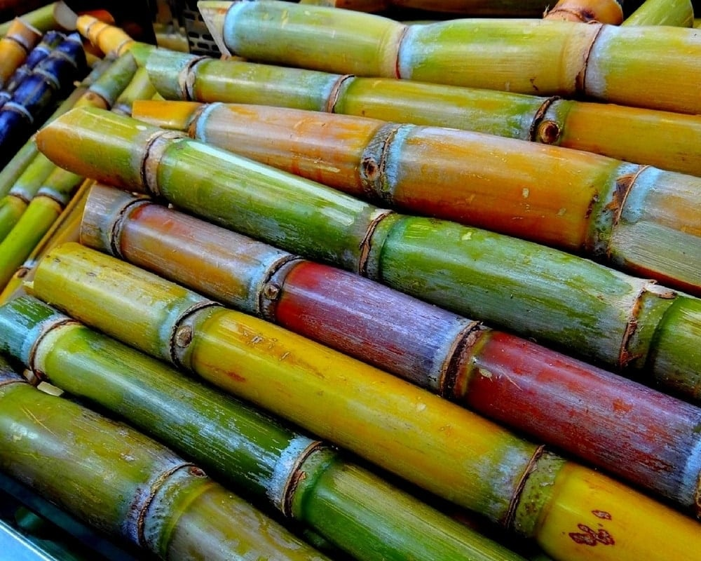 How to use sugarcane juice Nutritional value of sugarcane juice Drinking sugarcane juice daily