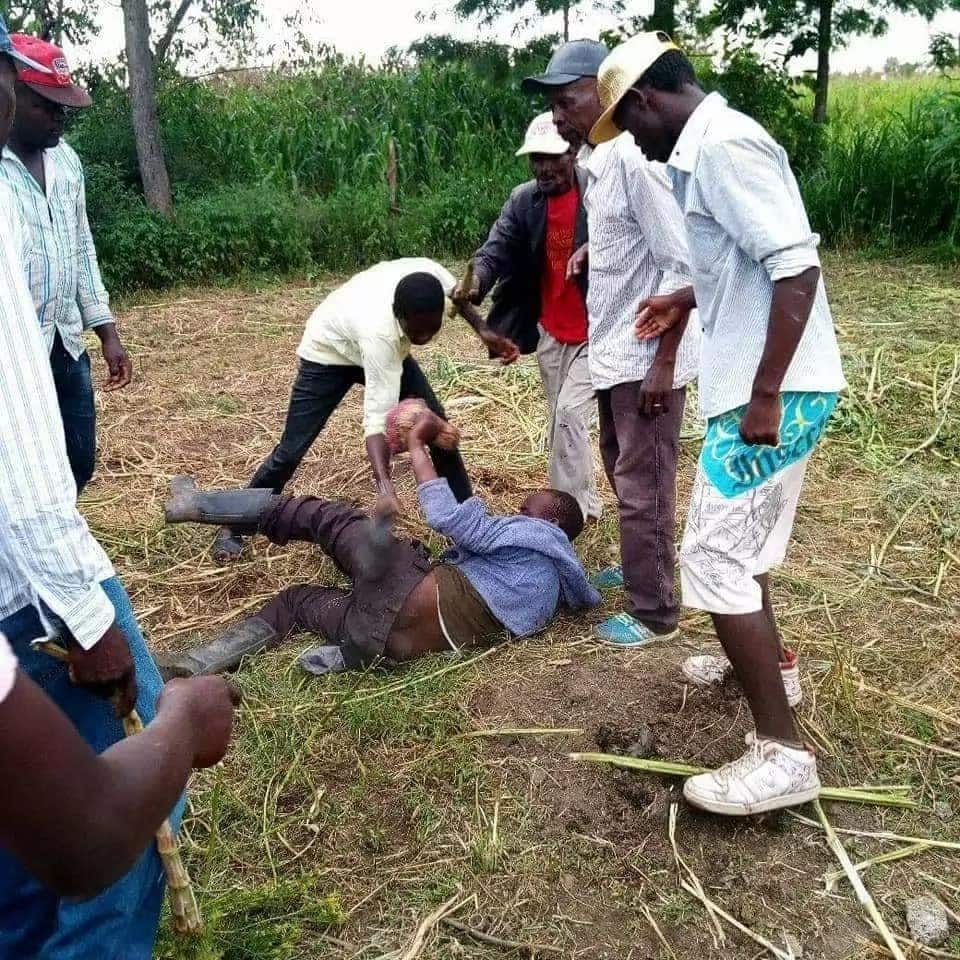 Nakuru man offers piece of land after being caught mounting neighbor's cow