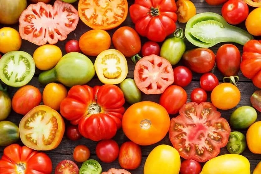 Tomato farming in Kenya. Grow the most popular tomatoes in Kenya