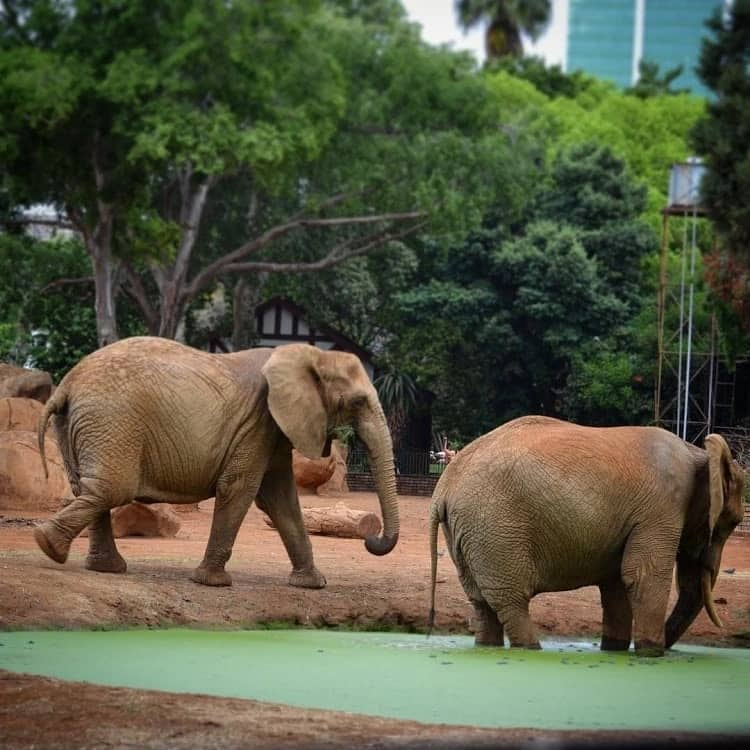 Entrance fee of Pretoria zoo