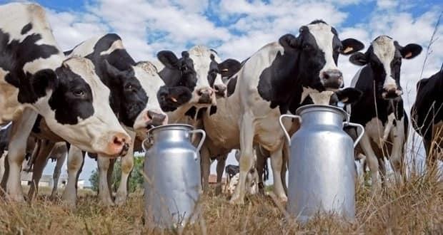 Milk production in Kenya 2018
