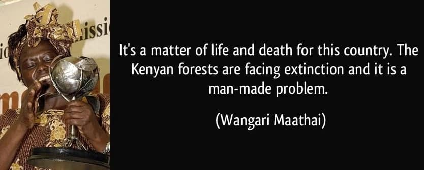 Wangari maathai quotes on forests, Quotes wangari maathai, More wangari maathai quotes
