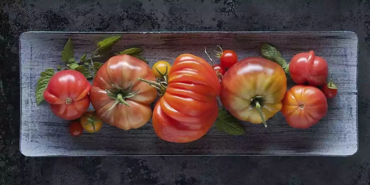 Tomato Farming in Kenya: Business plan, Revenue, and Tips ▷ Tuko co ke