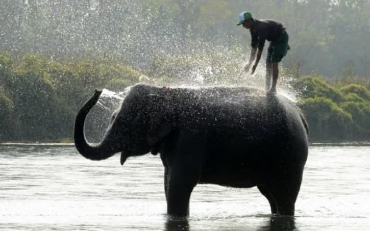 Mighty elephants rescue hundreds of tourists from the flooded jungle Safari park in Nepal