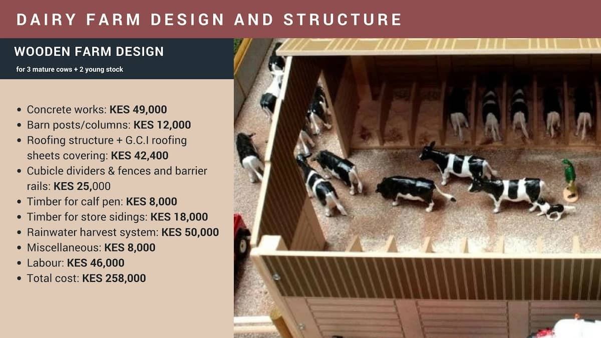 Dairy farm design and structure Kenya