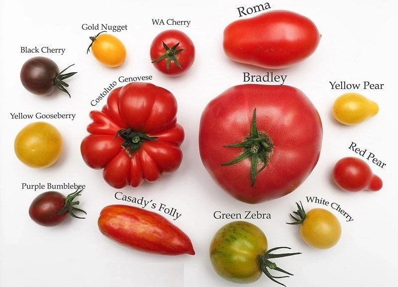 benefits of tomatoes, nutritional value of tomatoes, carbs in tomatoes